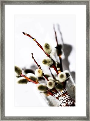 willow in color in a Glass Framed Print by Tommytechno Sweden