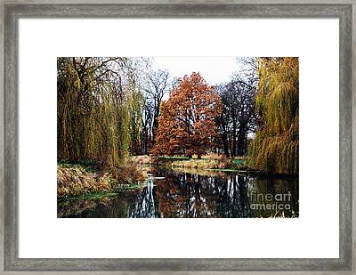 Framed Print featuring the photograph Willow Lake by Cassandra Buckley