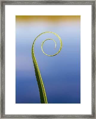 Willow Leaf Spiral Framed Print