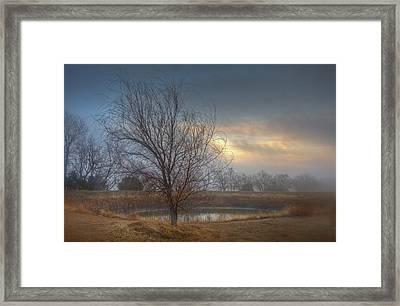 Willow Sunrise Framed Print by Mark Alder