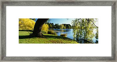 Willow Tree By A Lake, Green Lake Framed Print