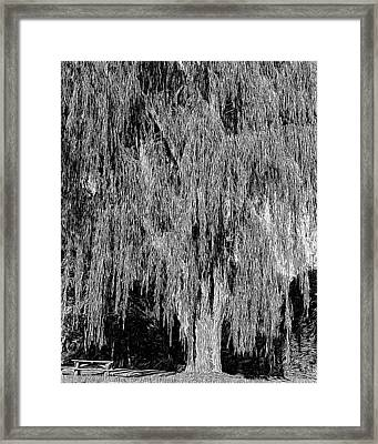 Willow Tree Framed Print by Paul Gioacchini
