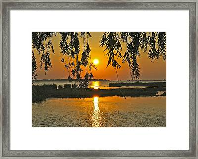 Willow Tree Sunset Framed Print by Frozen in Time Fine Art Photography
