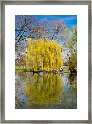 Willow Tree Water Reflection Framed Print