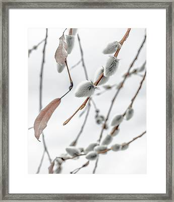 Willows In Snow Framed Print