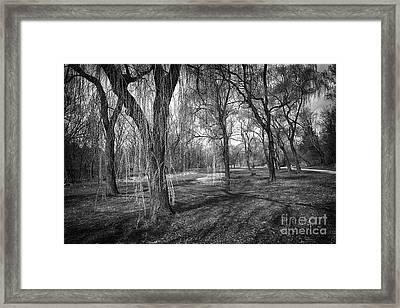 Willows In Spring Park Framed Print by Elena Elisseeva