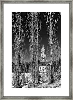Willows Framed Print by Jeffrey Ewig