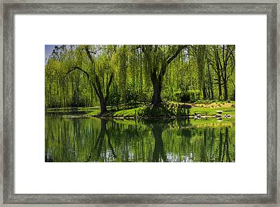 Willows Weep Into Their Reflection  Framed Print
