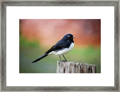 Willy Wagtail Austalian Bird Painting Framed Print