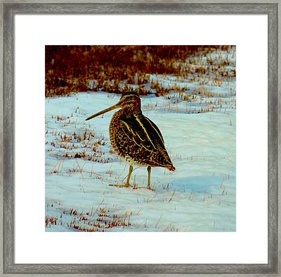 Wilson's Snipe 1 Framed Print by Stephanie Kendall