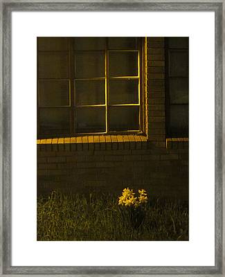 Wind And Window Flower Framed Print by Guy Ricketts