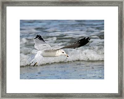 Wind Beneath My Wings Framed Print by Geoff Crego