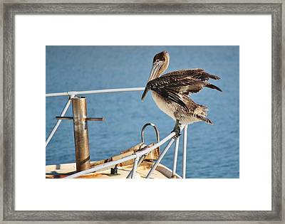 Wind Beneath My Wings Framed Print by Paulette Thomas