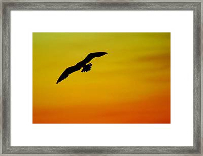 Wind Beneath My Wings Framed Print by Frozen in Time Fine Art Photography