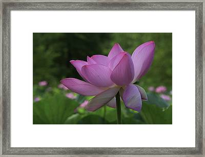 Framed Print featuring the photograph Wind Blown by Cindy Lark Hartman