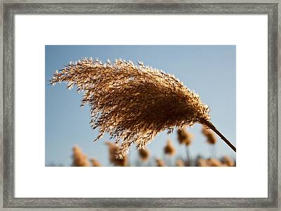 Framed Print featuring the photograph Wind Blown by David Stine
