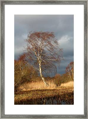Wind Direction Framed Print
