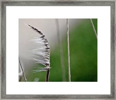 Wind Framed Print