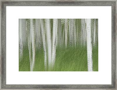 Wind In The Aspen Framed Print by Nancy Myer