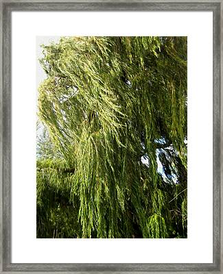 Wind In The Willow Framed Print by Kathy Bassett