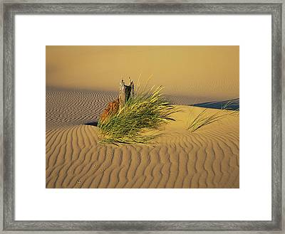 Wind Makes Ripples In The Sand Framed Print by Robert L. Potts