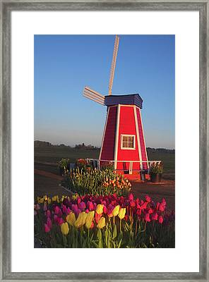 Wind Mill At The Tulip Festival Framed Print