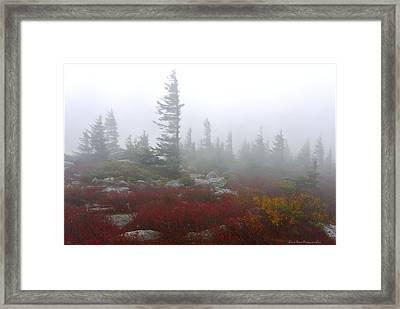 Wind Swept Pines Amongst The Foggy Mist Framed Print
