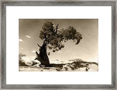 Wind Swept Tree Framed Print by Scott Norris
