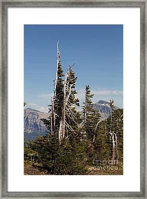 Wind Swept Trees Framed Print by June Hatleberg Photography