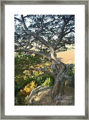 Wind Twisted Tree Framed Print