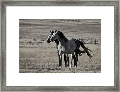 Windblown Framed Print by Wes and Dotty Weber
