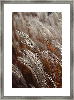 Windblown Grass Framed Print by Ken Dietz
