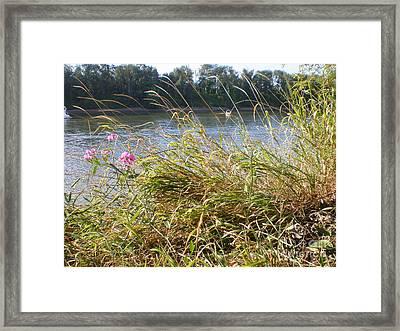 Windblown Grasses Framed Print