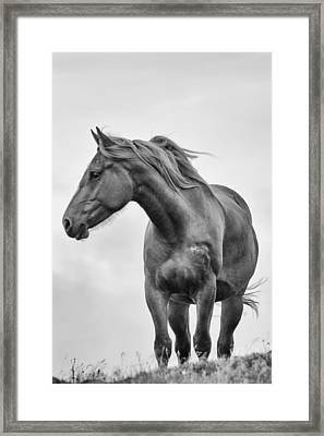 Windblown Horse Framed Print by Tracy Munson