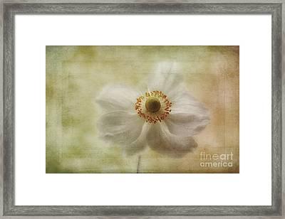 Windblown Framed Print by John Edwards