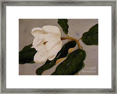 Windblown Magnolia Framed Print by Nancy Kane Chapman