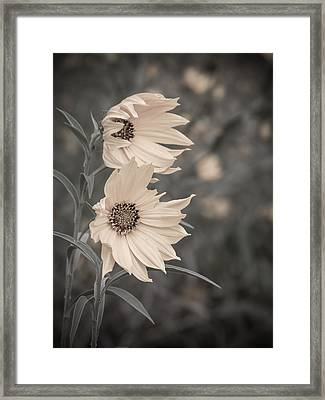 Windblown Wild Sunflowers Framed Print