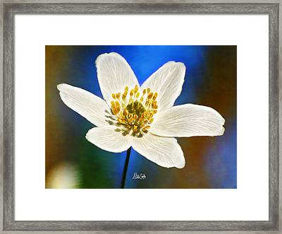 Windflower Whispers Framed Print by Nikki Marie Smith