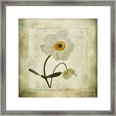 Windflowers Framed Print by John Edwards