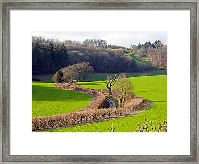 Winding Country Lane Framed Print by Tony Murtagh