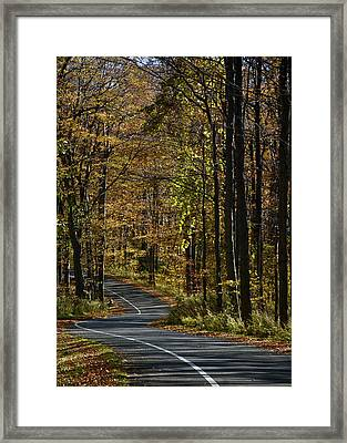 Winding Road In The Woods Framed Print
