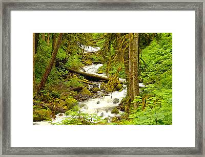 Winding Through The Forest Framed Print by Jeff Swan