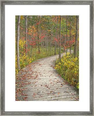 Framed Print featuring the photograph Winding Woods Walk by Ann Horn