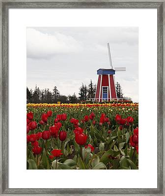 Windmill Red Tulips Framed Print by Athena Mckinzie