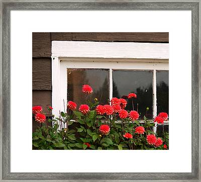 Window Box Delight Framed Print by Jordan Blackstone