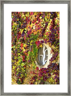 Window Covered In Virginia Creeper Framed Print