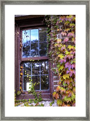 Window In Mayslake Ivy Framed Print by Ed Cilley