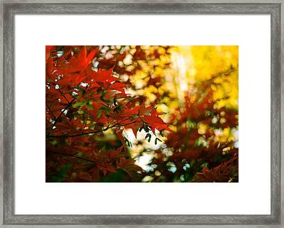 Window Into Fall Framed Print by Ronda Broatch