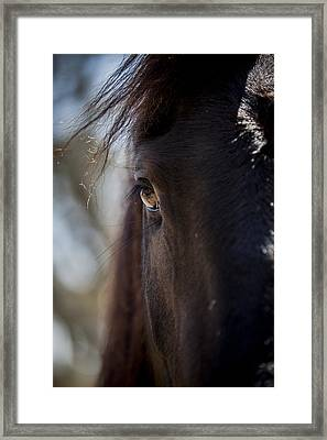 Window Into The Gentle Giant's Soul Framed Print