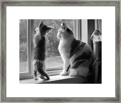 Window Of Opportunity Bw Framed Print